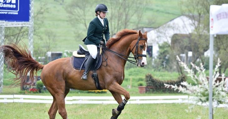 Românii au câștigat mai multe medalii de aur la Transylvania Horse Show